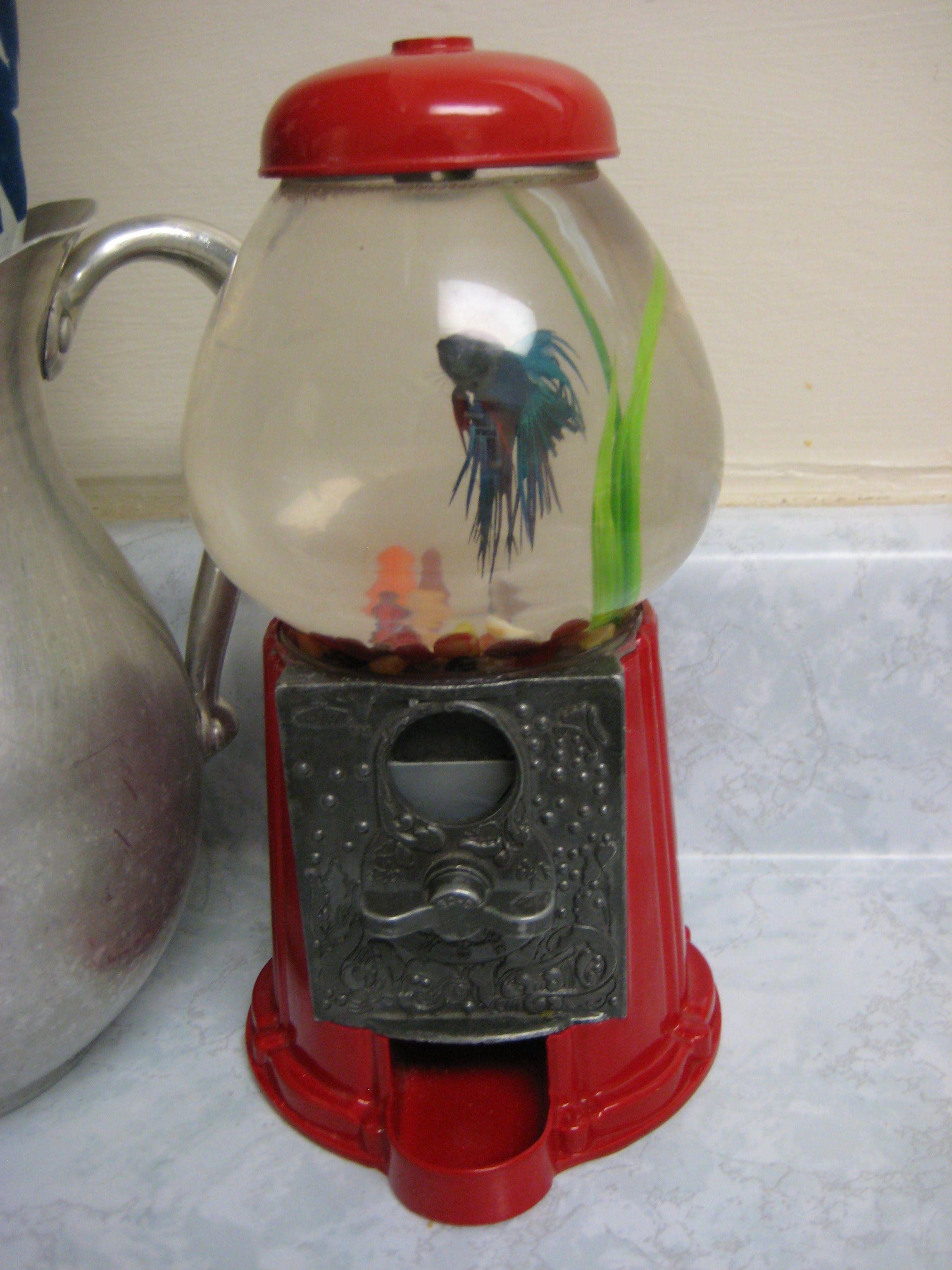 Fish tank toilet - Cute Fish Tank
