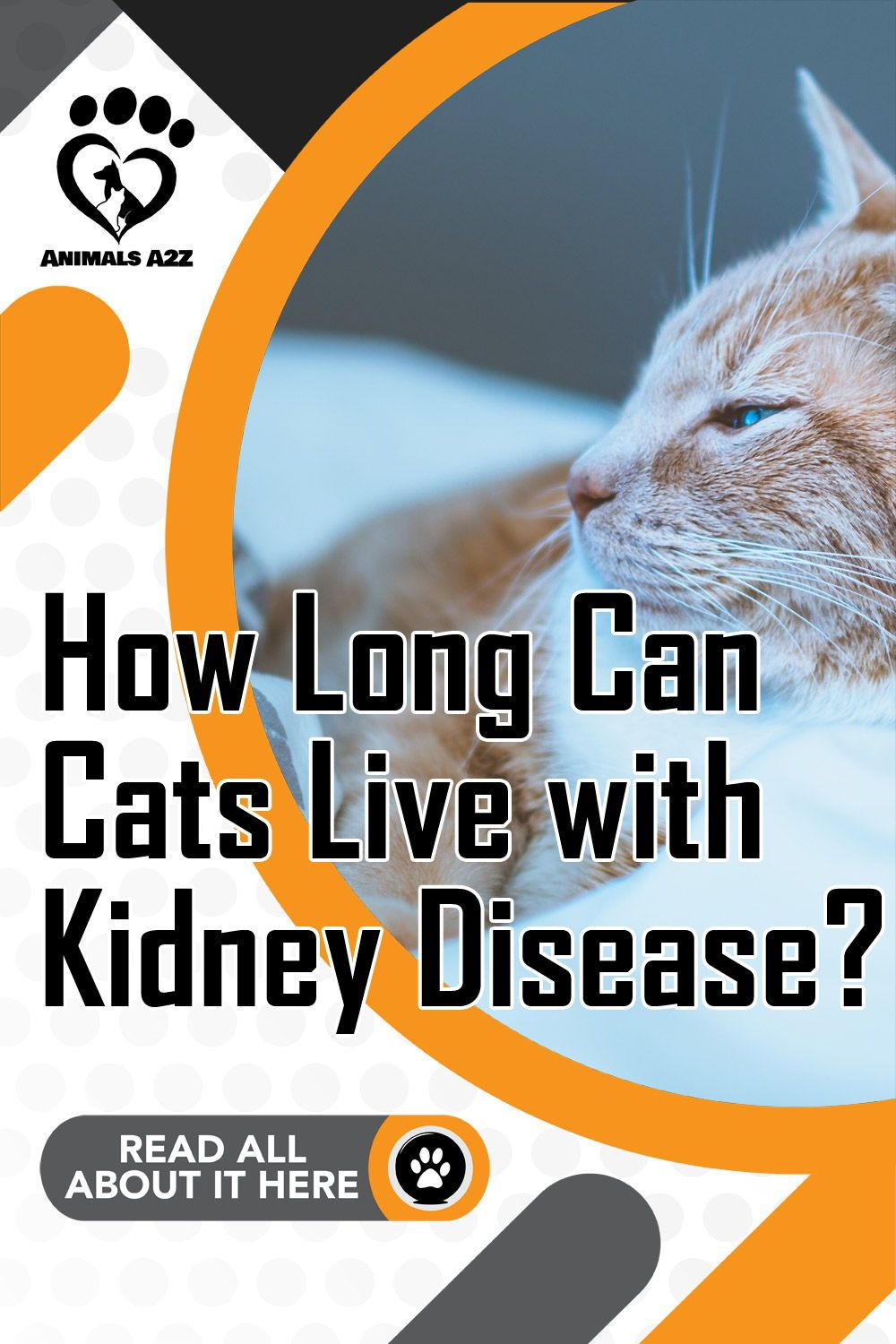 How Long Can Cats Live With Kidney Disease In 2020 Cat Kidney Cat Health Problems Kidney Disease