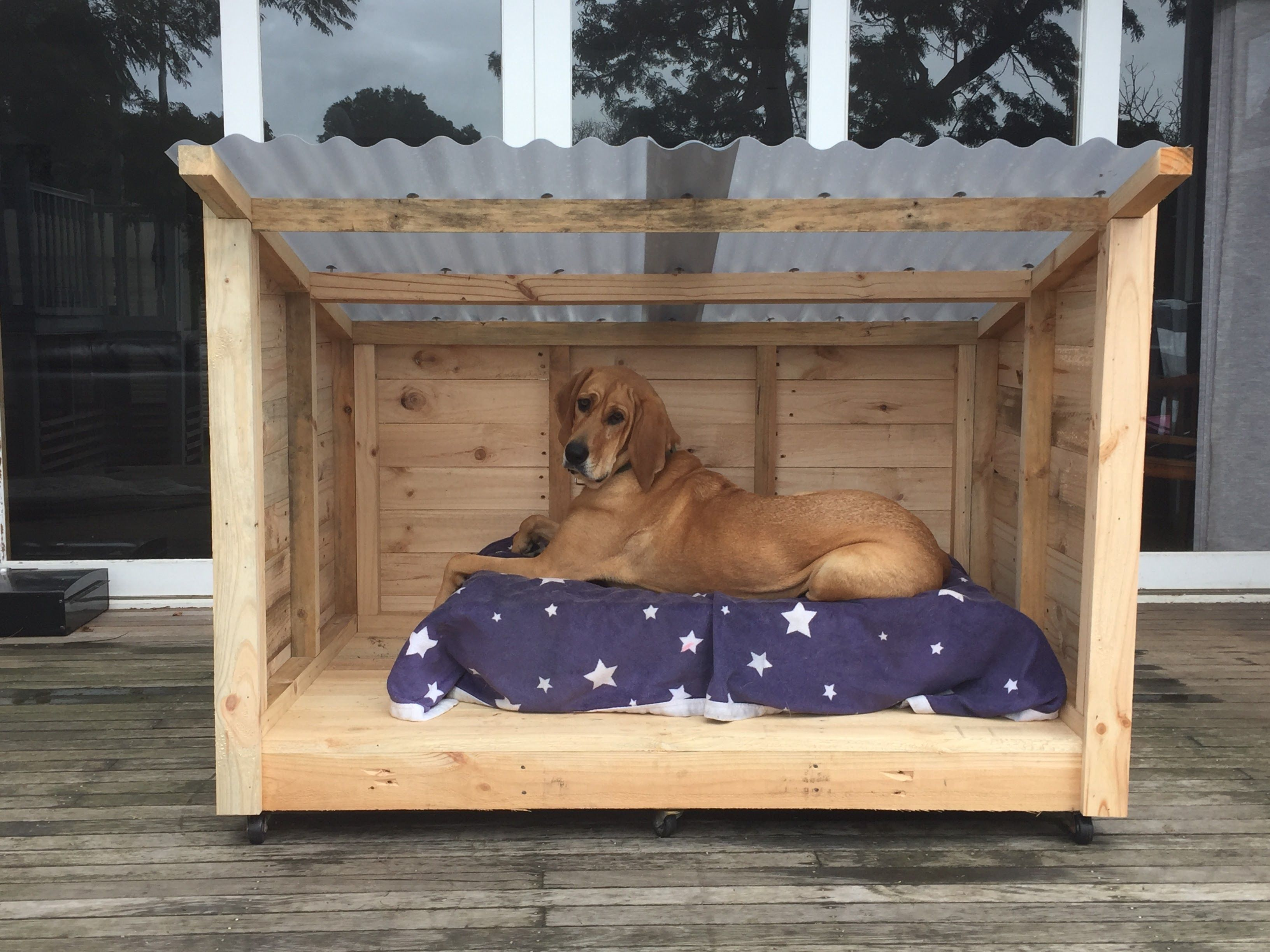 Minimum Kennel Size For  Big Dogs