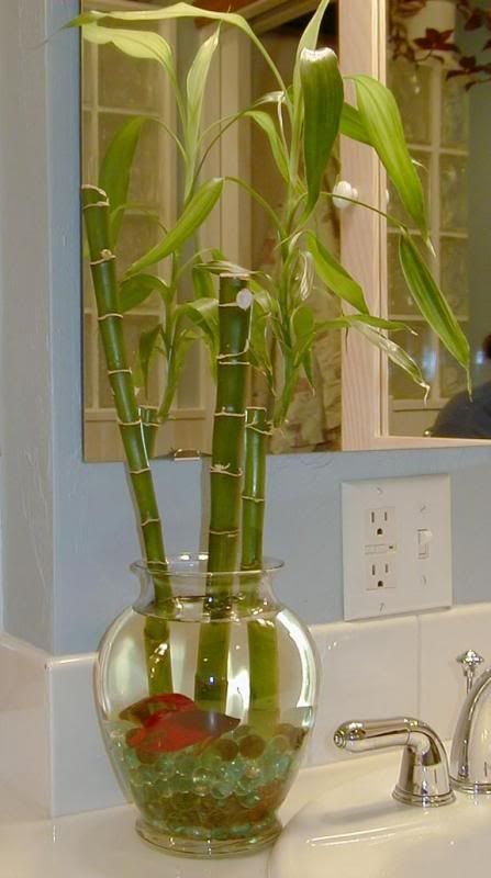 A Possible Variation On The Betta Vase Idea That Is Better For Fish