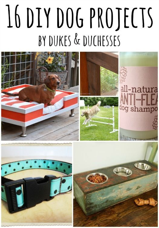 16 Super Cool Diy Projects That Will Be Great For Your Fur Baby