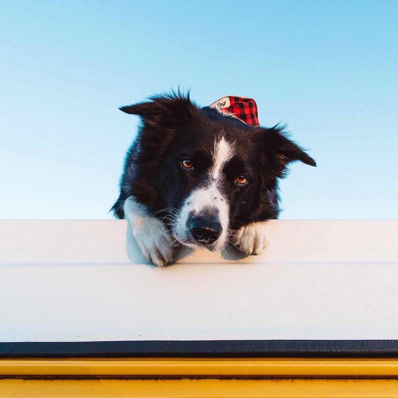 findmomo | Hundar, Doge