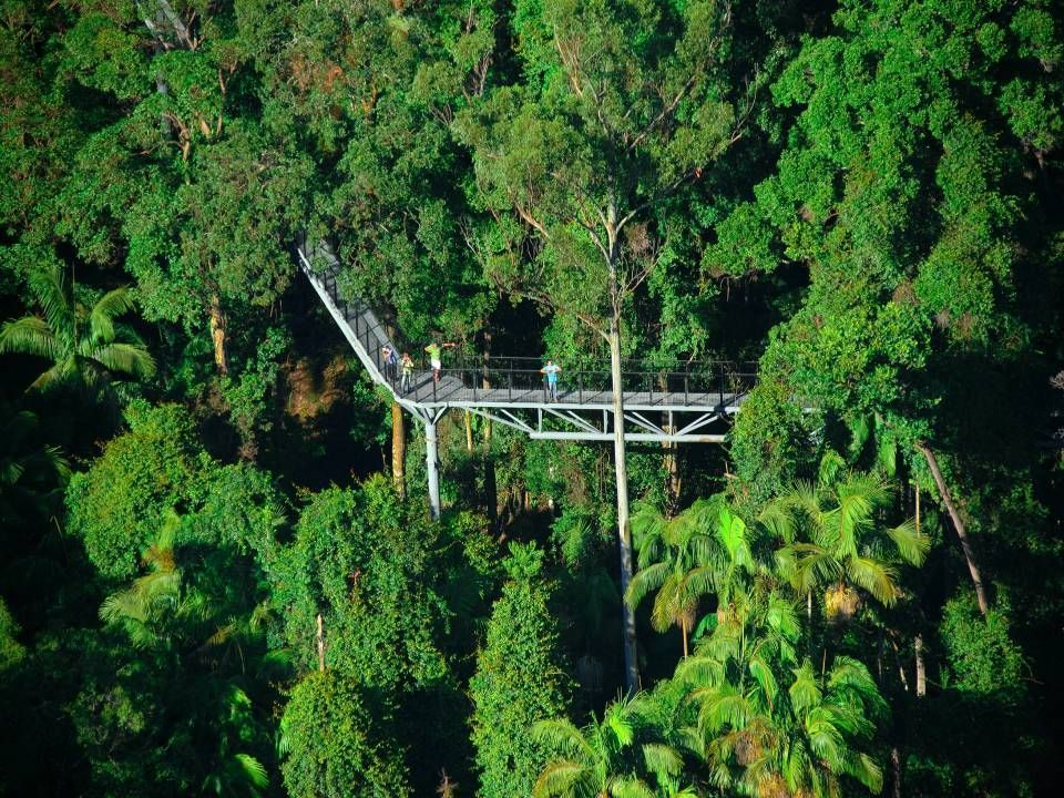 the forest canopy walk gold coast hinterland coffee. Black Bedroom Furniture Sets. Home Design Ideas