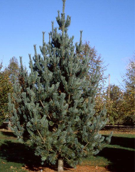 Sherwood Pines Christmas Trees