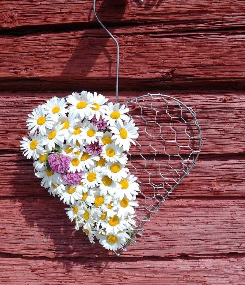 ромашка сердце картинка