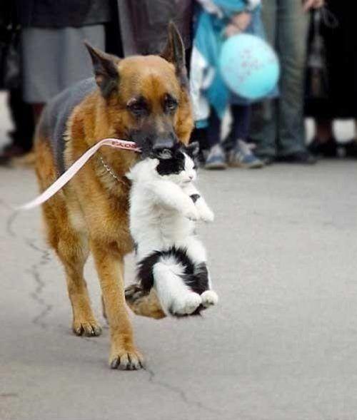 Животные, которые всегда придут на помощь LOVELY ANIMALS ...
