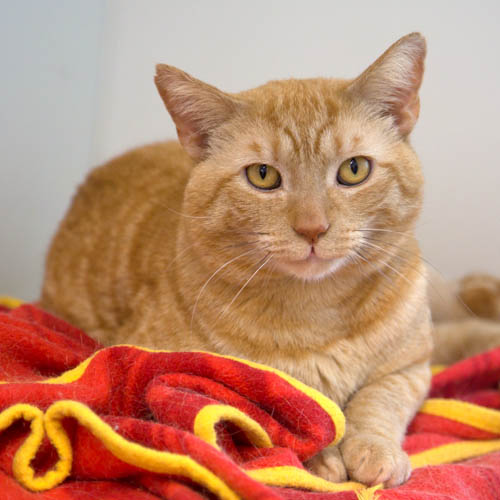 Monarch North Clwyd Animal Rescue Cat Adoption Animals