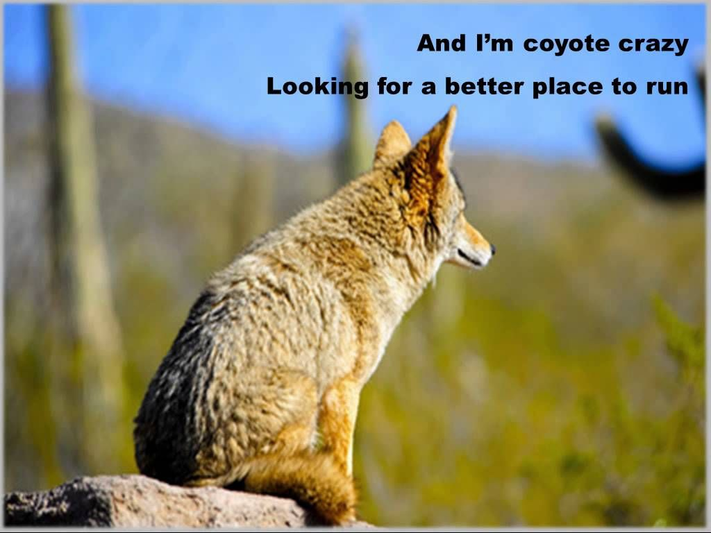 Coyote Crazy by The Mystic Cowboys on the Bar Room Prayers