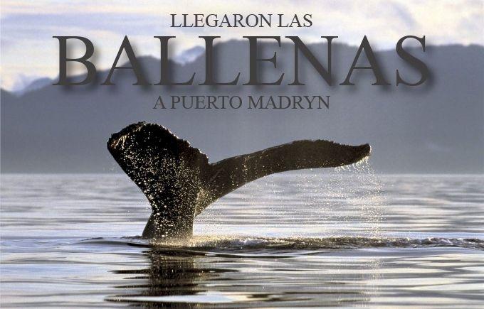 ¡Llegaron las ballenas a Puerto Madryn! - ¡Pregunta por nuestros paquetes y disfruta de este maravilloso espectáculo! - Hasta el 28 de Febrero de 2014