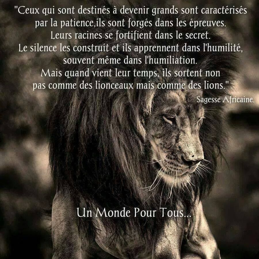 citation proverbe citations proverbes texte lion. Black Bedroom Furniture Sets. Home Design Ideas