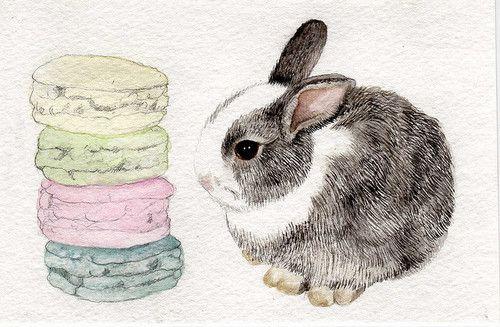 Bunny and macarons