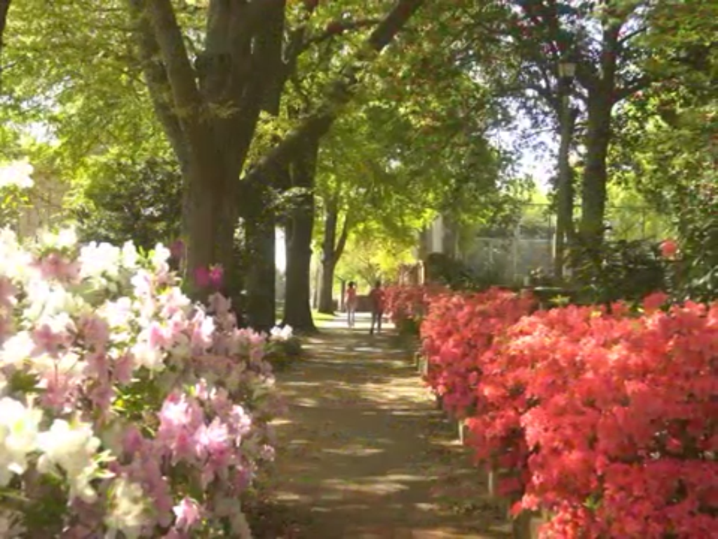 Pin By Charlie Speight On Usc Campus Images Photo Azaleas