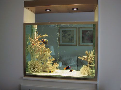 Awesome In The Wall Fish Tank Want To Do This In The Living Room Area There 39 S No Place Like