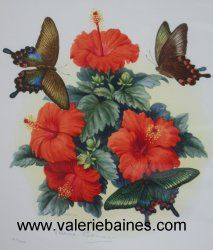 Tropical Butterflies with Hibiscusby Valerie Baines