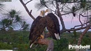Eagle Cam - Videos