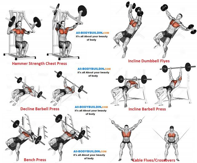 Chest Training Program F