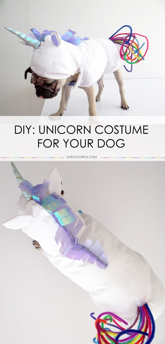 How To Make A Unicorn Costume For Your Dog Diy Dog Costumes Dog