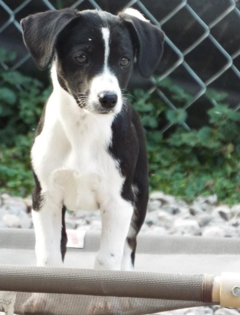 Adopt York On Doggies Terrier Mix Dogs Parson Russell Terrier