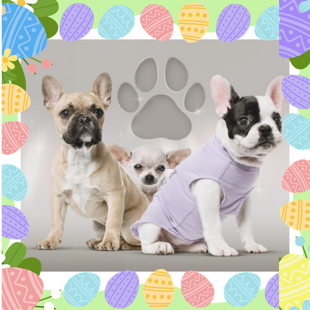 We All Have Reason To Rejoice This Easter With Our Pooches Gift Them Their Favorite Toy Clothes Or More From Our Toonpet Colle Dog Pjs Dog Clothes Dog Hoodie
