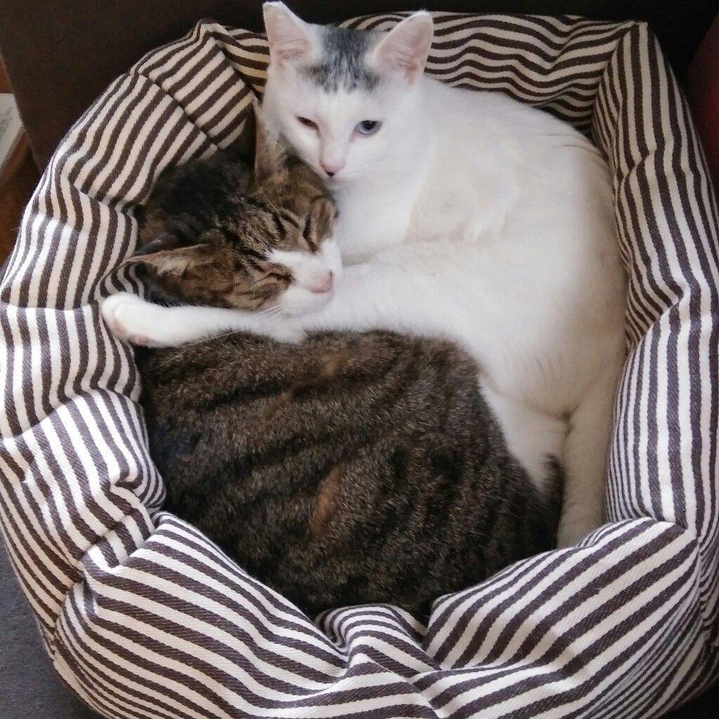 たった540円でできちゃう手作り猫ベッド 安くて簡単 愛猫のためにチャレンジしてみては 猫 ベッド 手作り 猫 クッション 犬 クッション