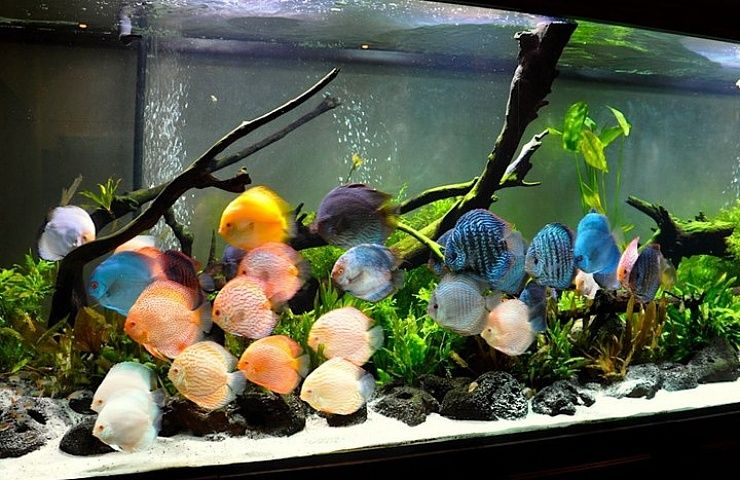Learn from my mistakes on how to keep discus fish and save for Keeping discus fish