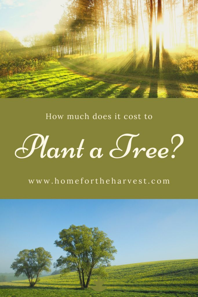 How Much Does it Cost to Plant a Tree? in 2020   Trees to ...