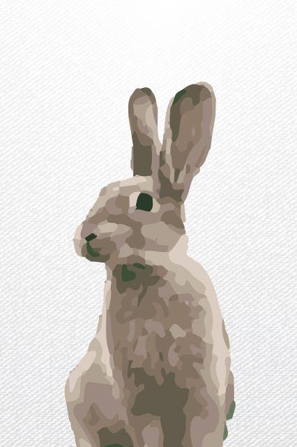 Rabbit | Posters: Animais | Pinterest | Anatomía animal, Anatomía y ...