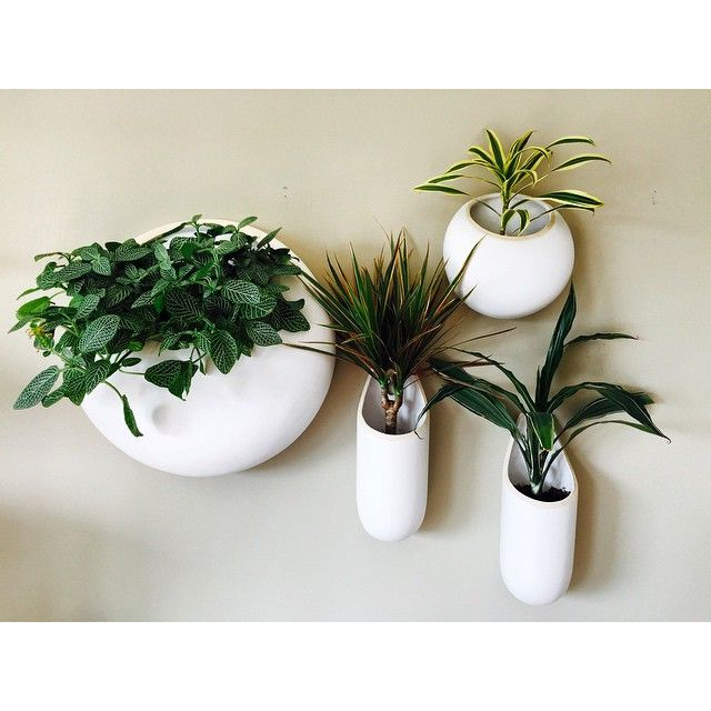 New wall planters for the home office!  #mywestelm #plants #interiordesign  #sloatgardencenter