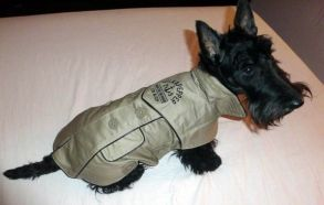 Discover and or buy waterproof captaine taupe, Milk and Pepper : http://www.sublimemydog.com/milk-and-pepper-vetement-chien-impermeable-captain-taupe