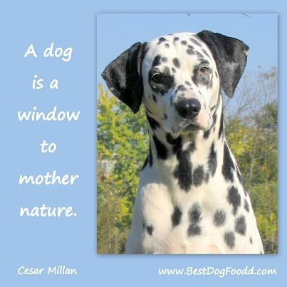 A Dog Is A Window To Mother Nature Inspirational Quote Dog