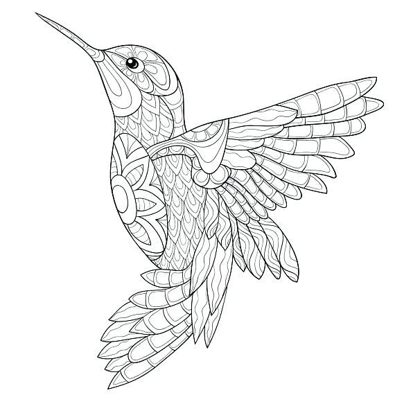 Hummingbird Coloring Pages Zentangle Mandala Bird Coloring
