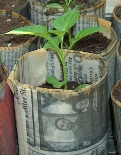 Exactly what we needed for the Earth Day Block Party! Newspaper seed pots that can be planted as is!