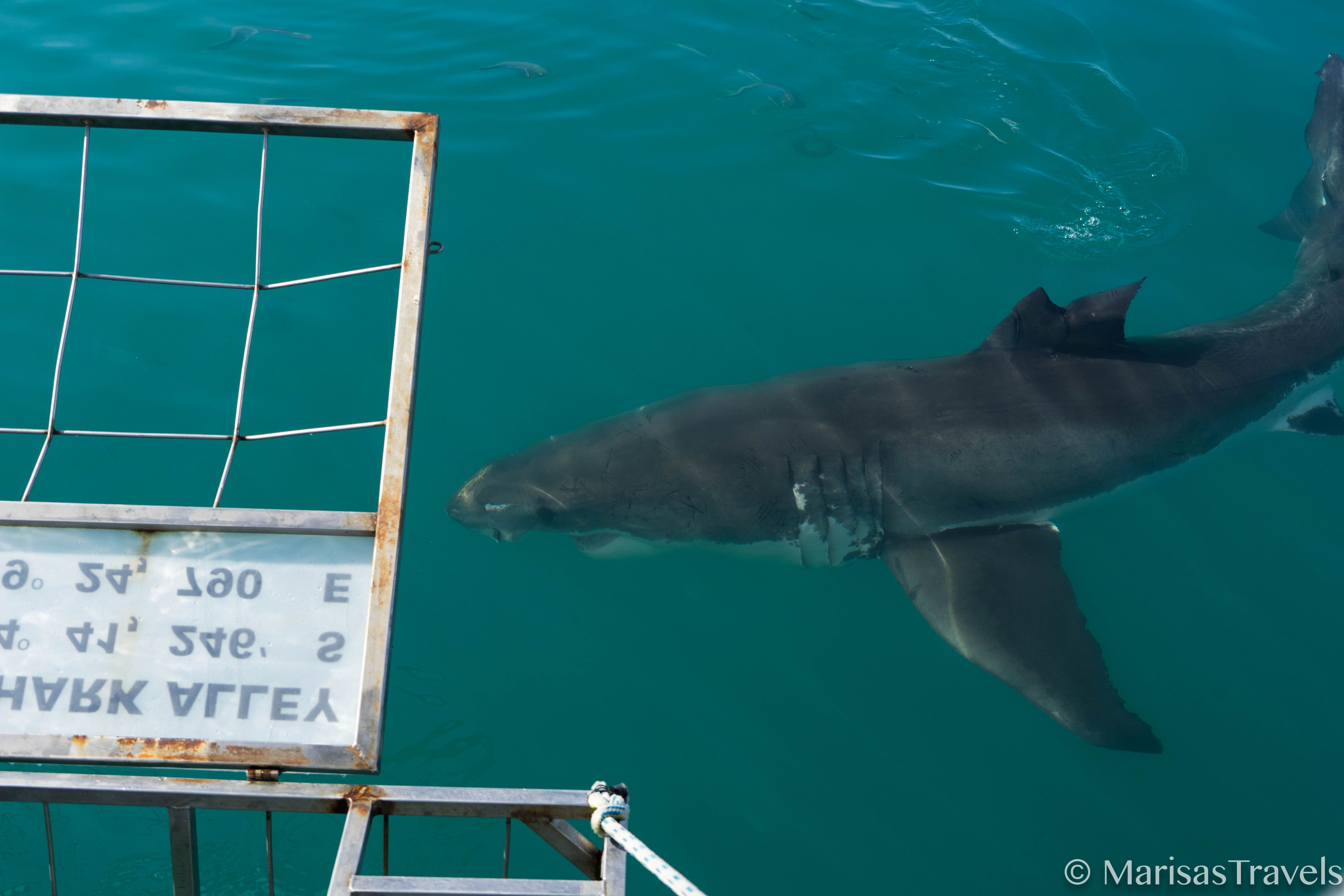 Cage Diving with Marine Dynamics in South Africa! www.marisastravels.com