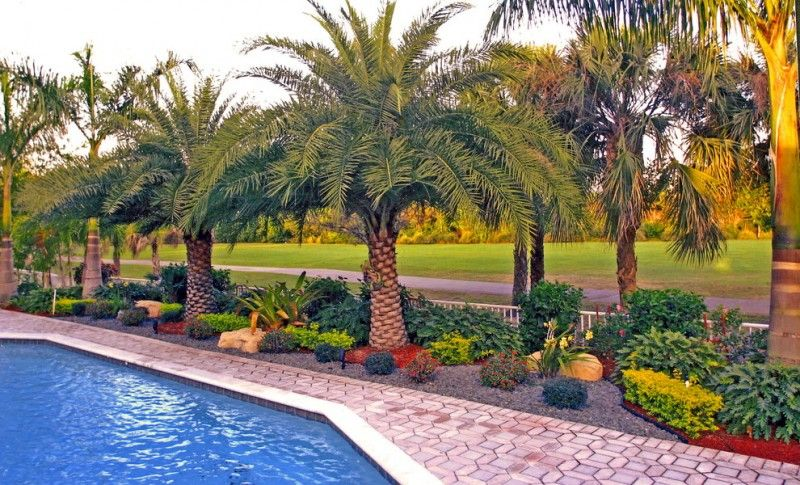 backyard with pool, diamond shape stones floring, ang royal ... on diamond interior design, diamond landscape quilt, diamond art design, diamond flower design,