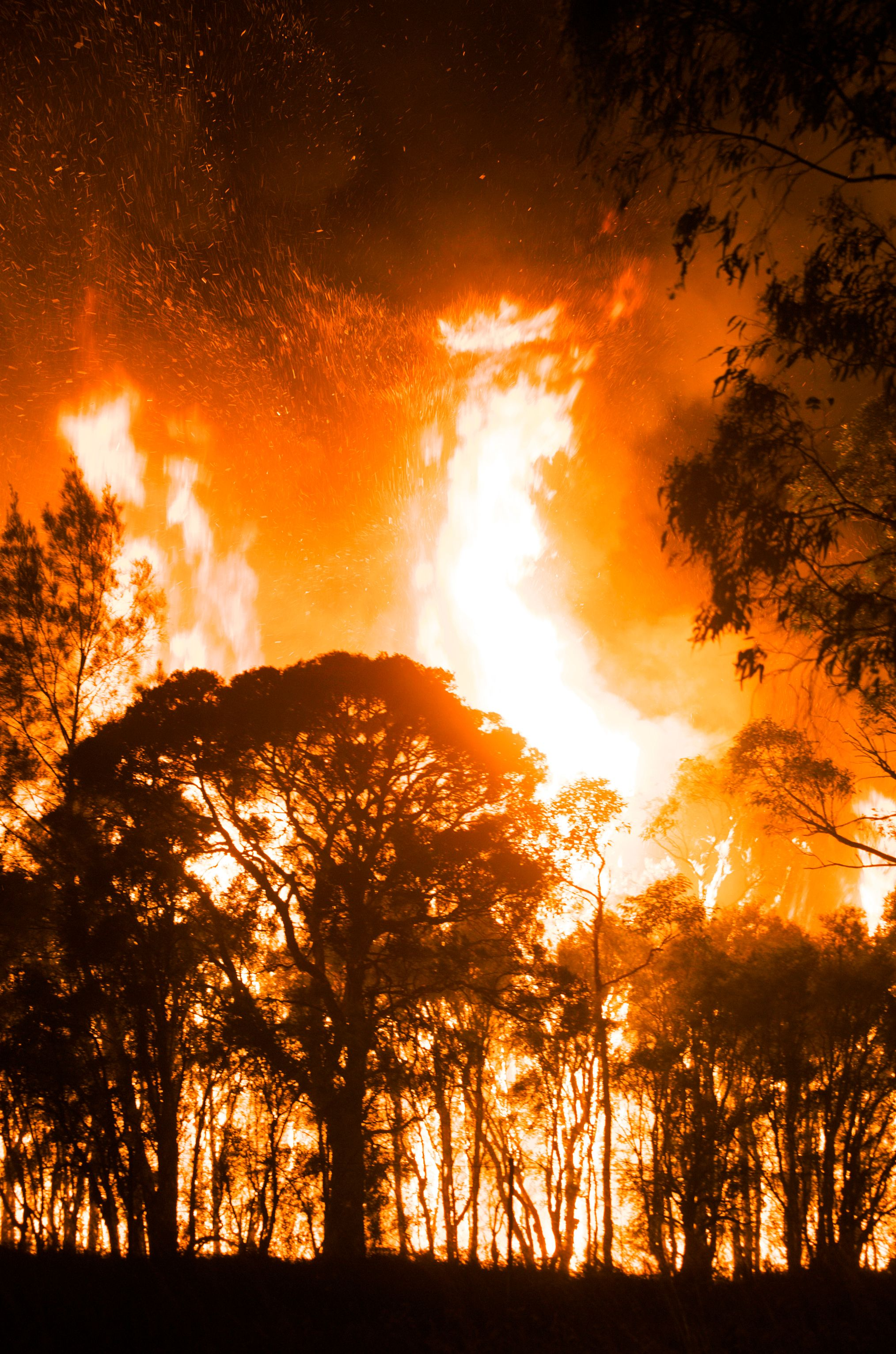 Australia's Devastating Wildfires in 2020 (With images