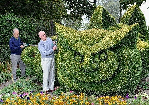 owl topiary hedges except homeboy gave them people noses fool buchsbaum im garten. Black Bedroom Furniture Sets. Home Design Ideas