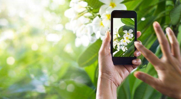 Identifier les plantes grâce à une application ? C'est