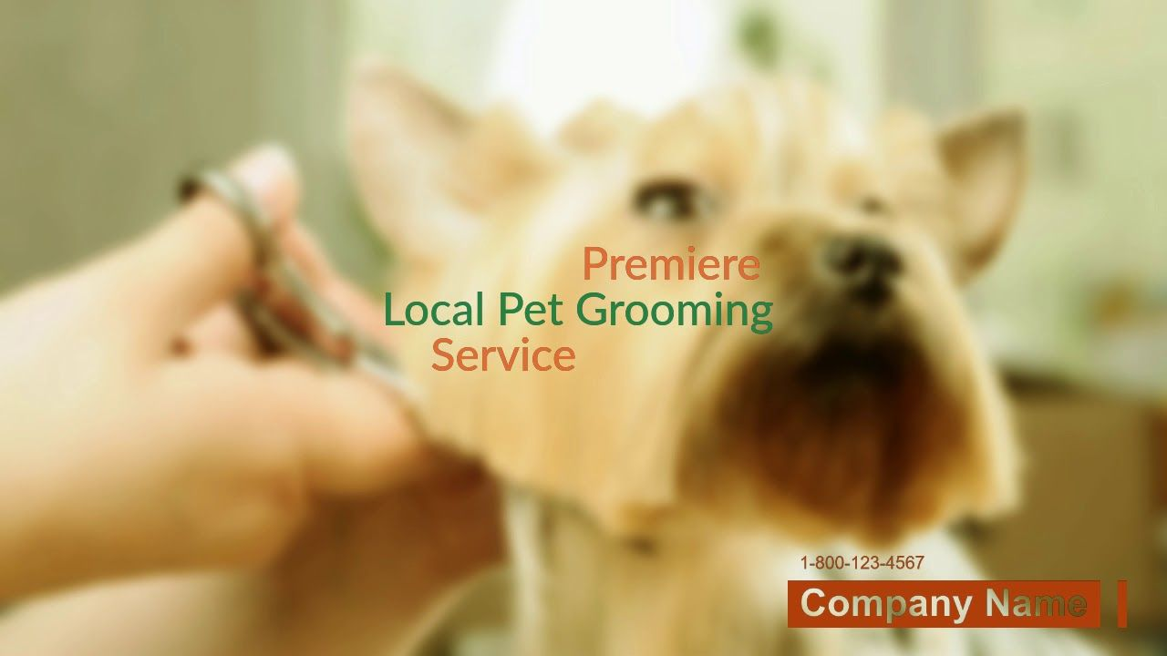 Mobile Dog & Cat Grooming Services Near Me Order Custom
