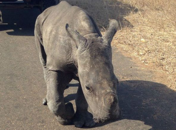 Baby rhino rescued in South Africa