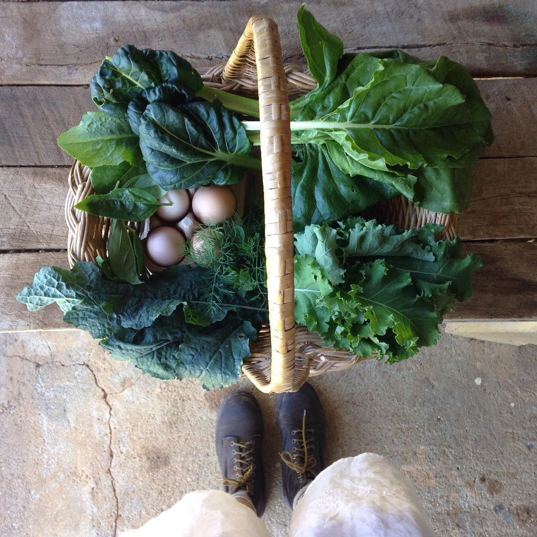 Danielle jane on instagram farm fresh farm fresh
