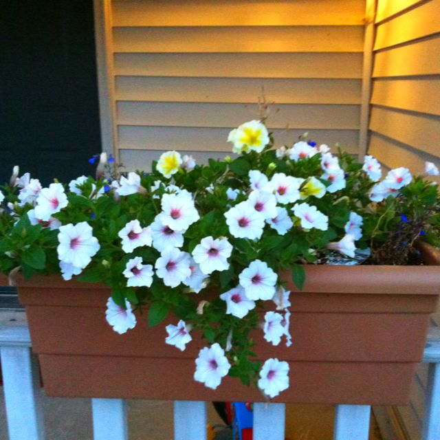 Flower Container Design For Railings: An Over The Deck Railing Flower Pot Full Of Annuals At A