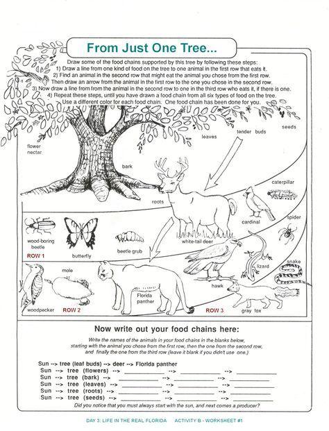 Decomposers Worksheets For Kids Archbold Biological