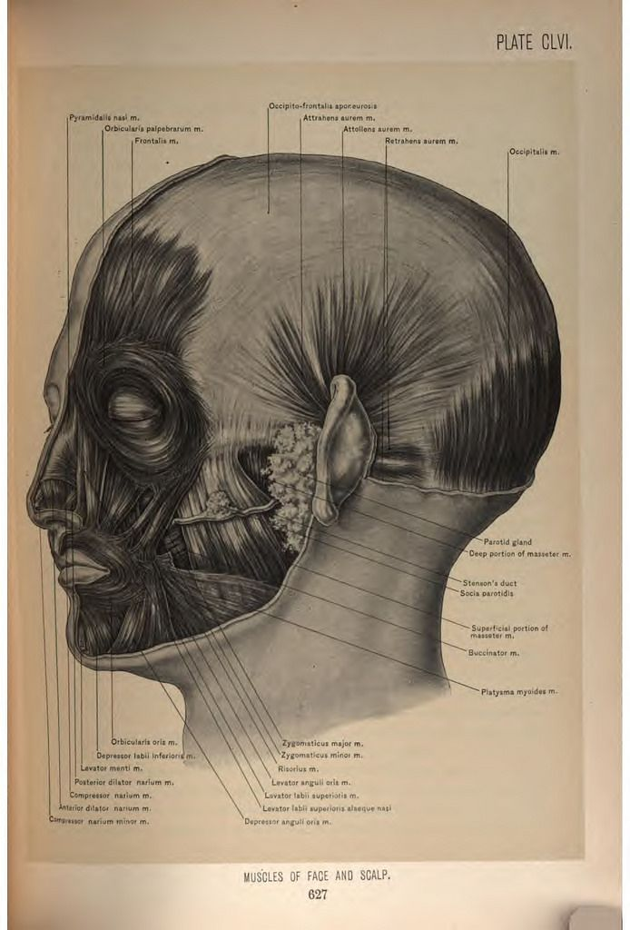 Surgical Anatomy of the Head and Neck | John blair, Public domain ...