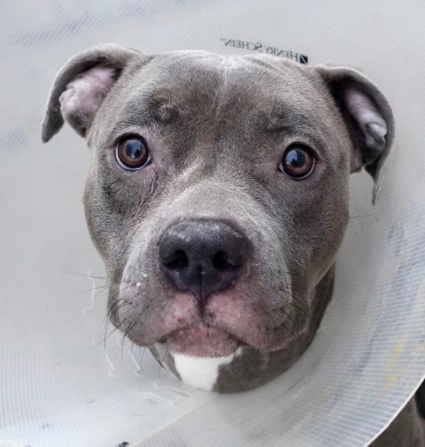BLU SKYLA A1101257 Free puppies, Dog adoption