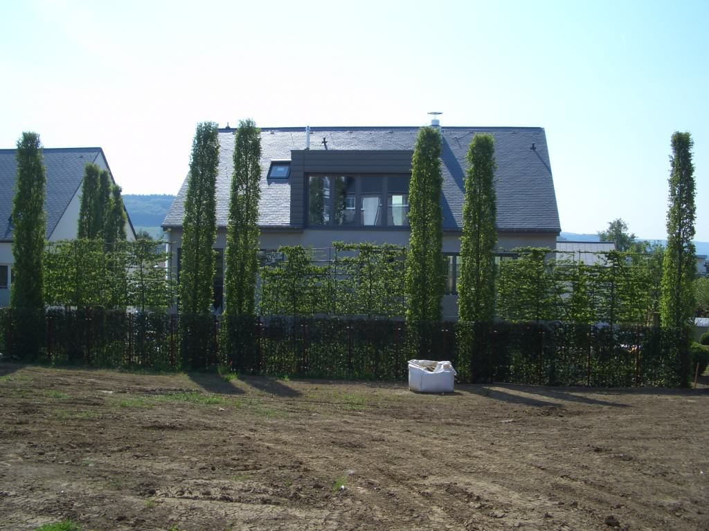 Spalierbaume Die Schwebende Hecke Sichtschutz Garten Garten
