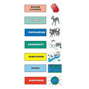 levels of organization biology worksheet - Termolak