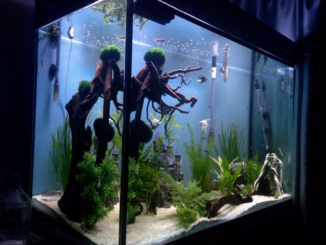 Work In Progress Aquascape Liveplants Bogwood Tropical Fish Aquarium Aquascape Beautiful Fish