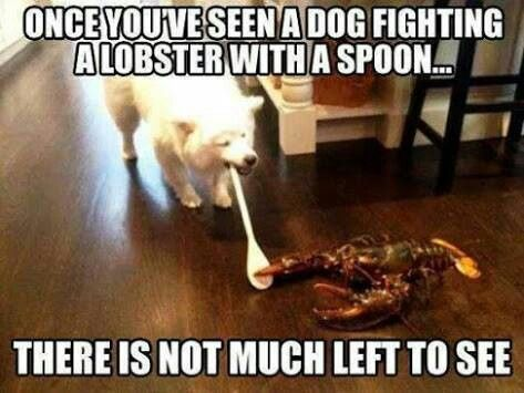 Dog fighting a lobster with a spoon
