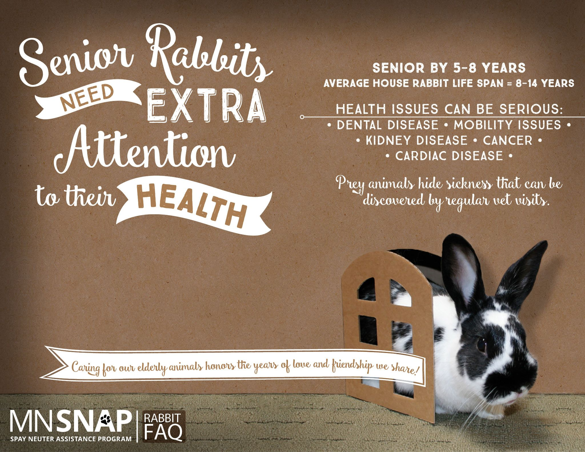 Senior Rabbits Require Extra Attention To Their Health And Wellness Rabbits Are Prey Animals Who Instinctively Hide Il Rabbit Life Bunny Care Rabbit Life Span