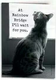 At Rainbow Bridge Ill Wait For You Cats Memory Quotes Pics